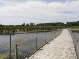 Wood Lake nature