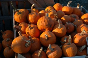 Fall Fun at Pinehaven Farm