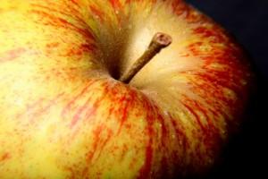 Afton Apple Orchard Apple Fest