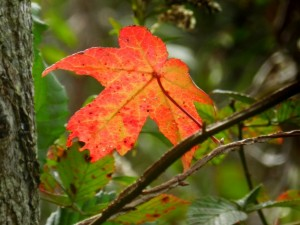 Fall Color Blast today at Lee and Rose Warner Nature Center