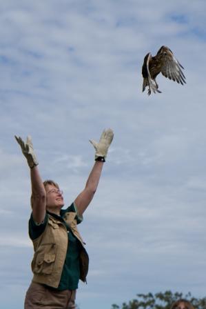 fall-raptor-release