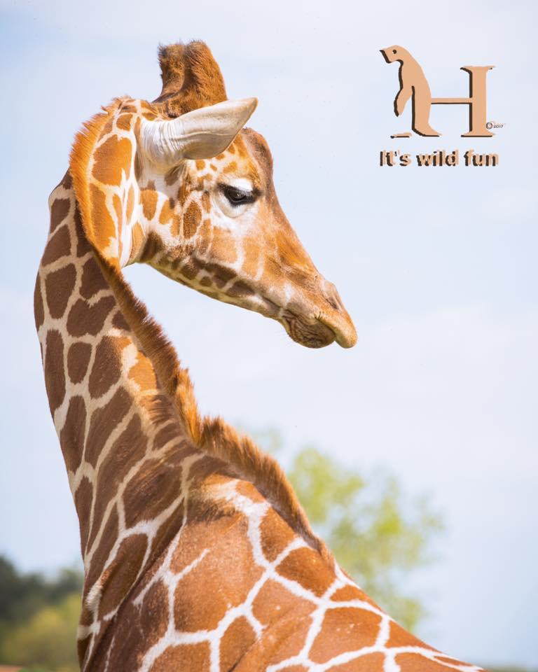 Hemker Zoo