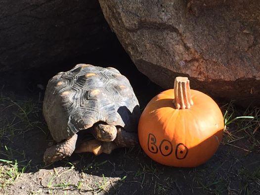 Hemker Park and Zoo Halloween Event