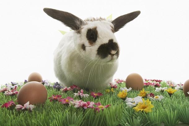 Free Public Easter Egg Hunts in Minnesota