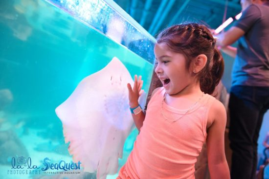 SeaQuest Roseville Discount Admission