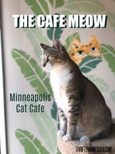 The Cafe Meow Cat Cafe Minneapolis