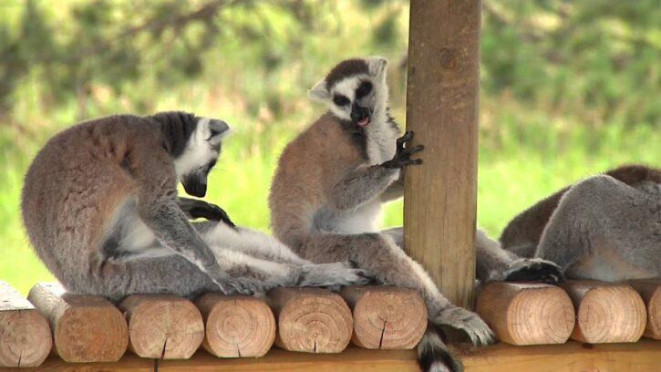 Safari North Wildlife Park in Brainerd