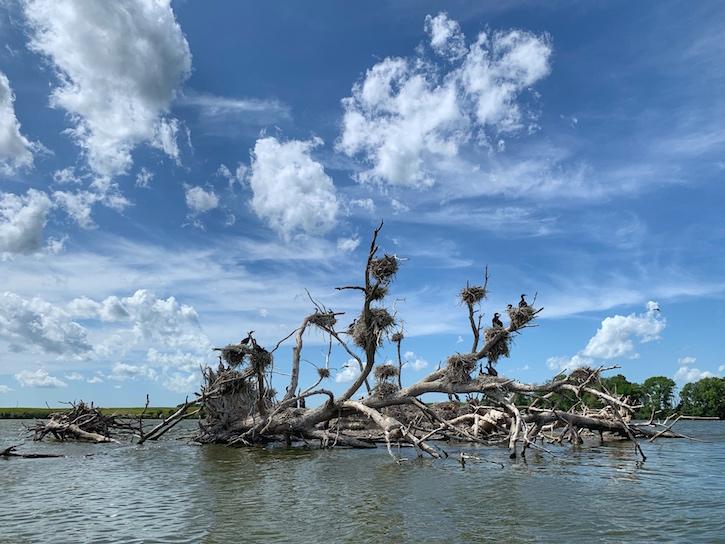 Estherville IA High Lake Gulls