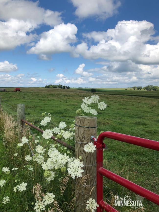 Estherville IA Farmland