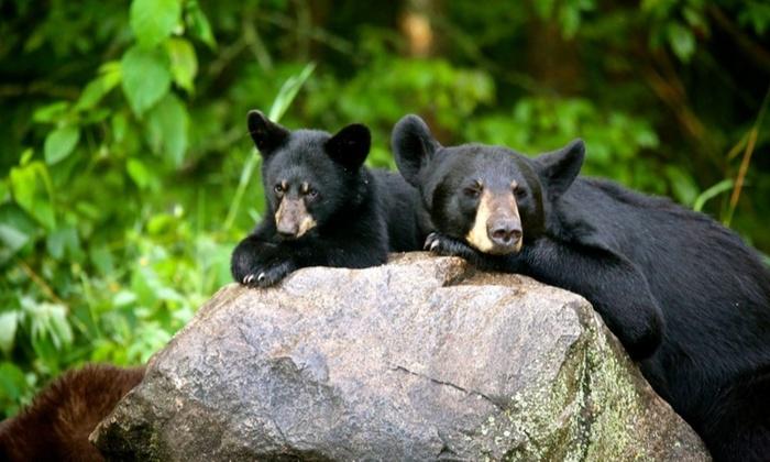 two black bears on rock