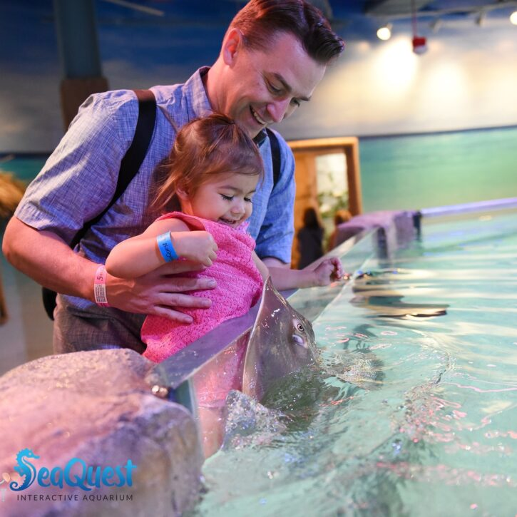 Dad and daughter with stingrays at SeaQuest Roseville