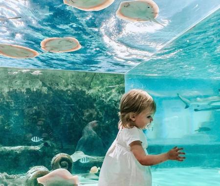 seaquest aquarium