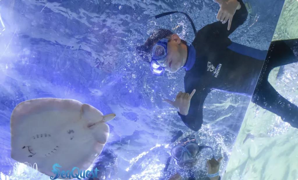 seaquest snorkeling