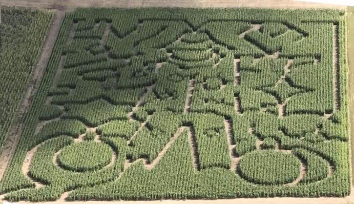 Pearson Family Farm Corn Maze