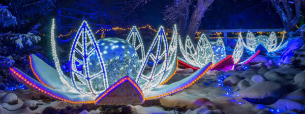 Winter Lights | Chanhassen (Minnesota Landscape Arboretum)
