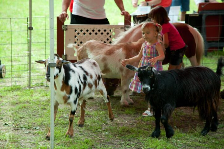 Petting Zoo at The Mustard Seed Garden Center